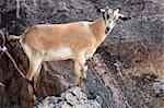 Abela Rock in Katakwi, Uganda - The Pearl of Africa