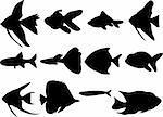 collection of aquarium fish silhouette - vector