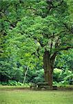 rest place under big tree