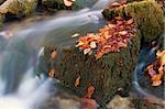 autumn broock