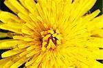 Yellow flower. Macro shot, top view.