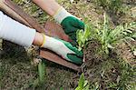 Woman digging up weeds in backyard