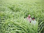 Farmers examining biomass fuel crop