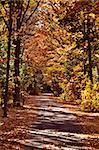 Autumn Trees fall Michigan colors beautiful red orange