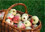 tasty apples in the big basket