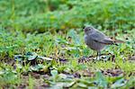 little bird on the grass green