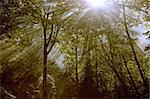 the deep forest lightbeam