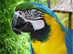 parrot bird in wildlife