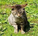 detail of cat on green grass