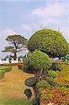 Trimmed bush in a formal garden