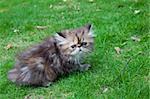 the kitten playing