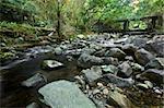 Cascade falls over mossy rocks