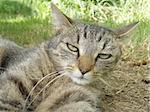 detail portrait of a cat on green grass