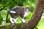 Chat de chasse sur un arbre