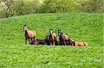 Many horses on a green field.