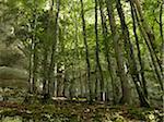 Mur de pierre dans la forêt