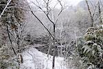 Paysage enneigé de Hakone, Japon