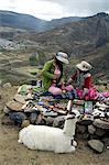 Peru, Colca canyon, wool factory and vicuna