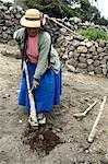 Peru, Sillustani, agriculture
