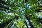 Vordächer von Ponga Bäumen, Neuseeland