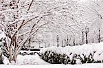 Beacon Street after winter storm, Boston, Massachusetts, USA