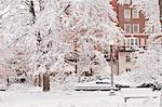Snow covered trees in a public park, Boston Public Garden, Beacon Street, Boston, Massachusetts, USA