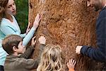 Toucher le tronc de l'arbre de famille