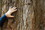 Main de l'homme sur le tronc de l'arbre, recadrée