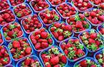 Erdbeeren, Lyon
