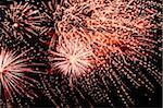 Unabhängigkeitstag Feuerwerkskörper in den Nachthimmel anzeigen