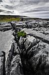 coastal limestone rock formations