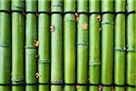 Grüner Bambus, Japan, Kyoto