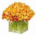 Parrot Tulips In Square Glass Vase