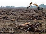 Ein Kran, ein Feld der Toten Entrümpelung Palmen.