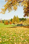 Sonniger Herbstmorgen im park
