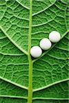 drug image,drugs on the leaf