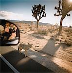 Frau fotografieren Coyote