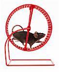 Rad-Maus in Übung, Studioaufnahme