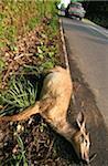 Tierischer Unfall