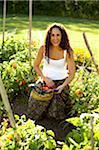 Woman Picking Tomatoes in Organic Garden
