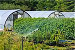 Water Sprinkler at Flower Farm