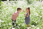Kinder spielen mit Nadelrad auf Gebiet der Blumen