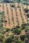 Olivenbäume wachsen am Hang in Südspanien