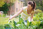 Junge Frau Kommissionierung Spinat im Garten