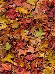 Autumn leaves, full frame