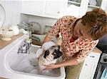 Femme lavant son chien Carlin dans un évier de cuisine