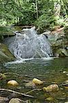Ruisseau à travers bois