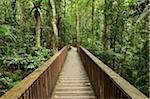 Boardwalk through Rainforest, Daintree National Park, Queensland, Australia