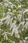 Plantes medicinales dans pré