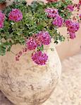 Plante à fleurs en pot en plein air